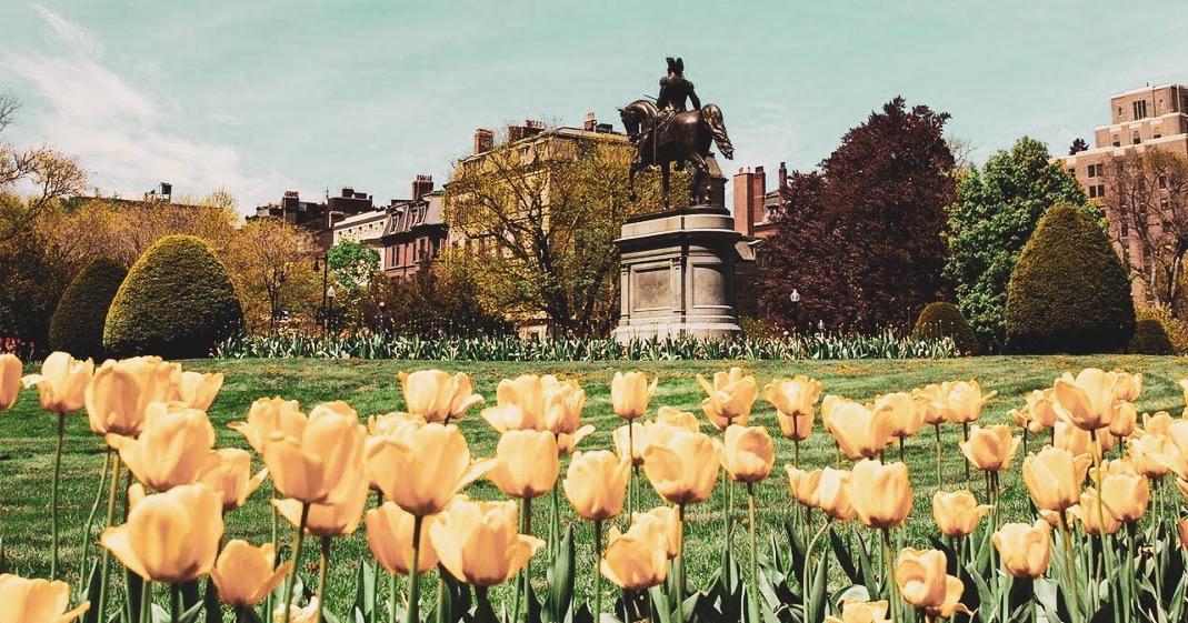 Boston-cosa-vedere-public-garden